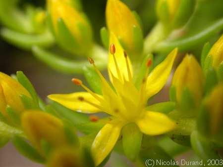 Volim žuto Nepal_2807