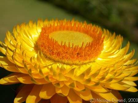 Volim žuto Nepal_3710